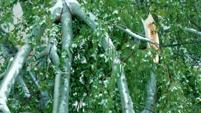 albero rotto da calamità naturali - ramo parte della pianta video stock e b–roll