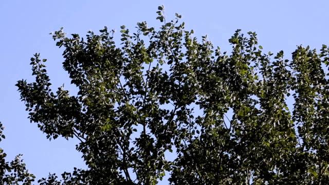 yavaş çekimde ağaç gölgeliği - sale stok videoları ve detay görüntü çekimi
