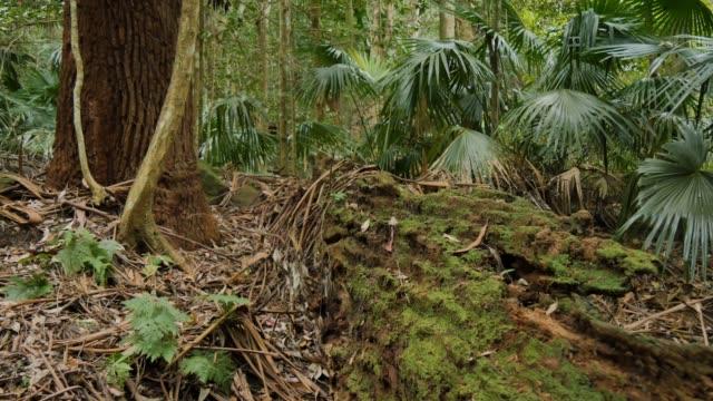 träd kapellet av vilda naturliga regnskog miljö - fornhistorisk tid bildbanksvideor och videomaterial från bakom kulisserna