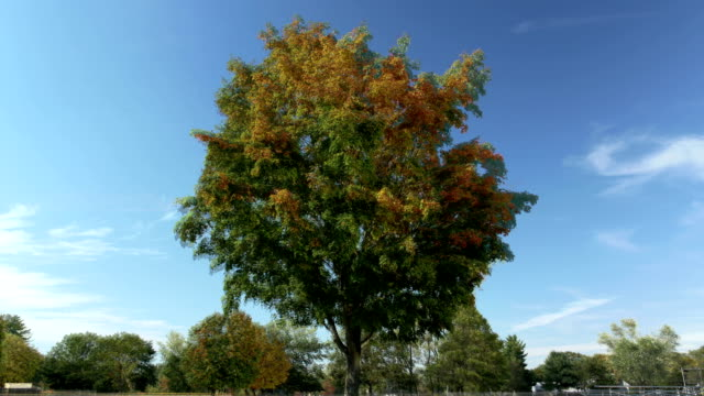 Tree changing with the seasons timelapse video