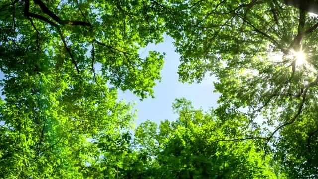 Tree Crowns in the Sun. HD 1080. video