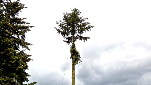 Tree Cutting video