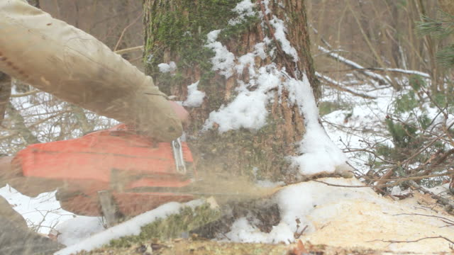 tree falling in the forest video