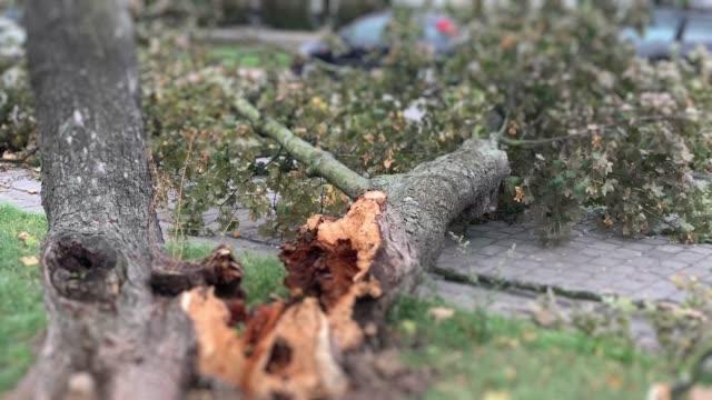vídeos y material grabado en eventos de stock de el árbol cayó sobre el coche en la calle - tornado