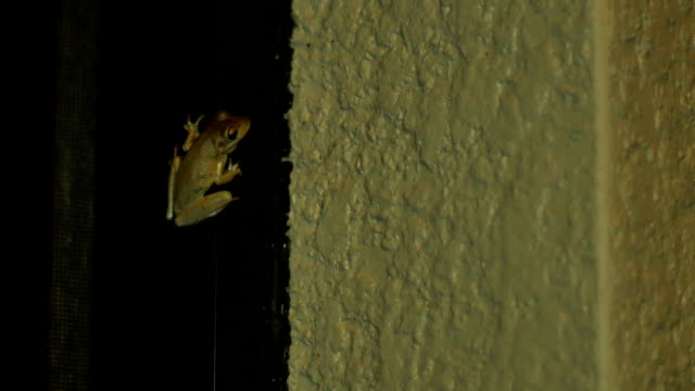 Tree frog at night inside of porch