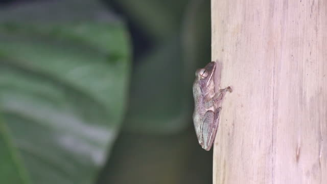 tree frog on the pole video