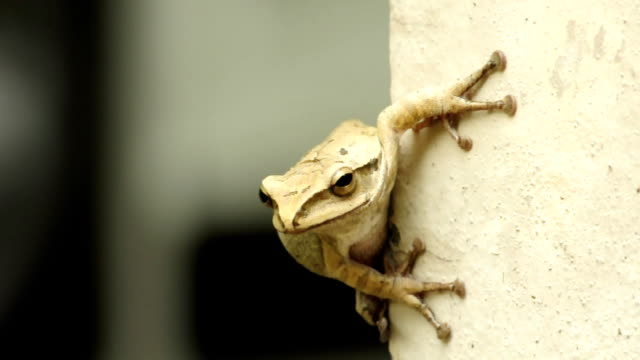 Tree frog In front of Tree frog frog stock videos & royalty-free footage