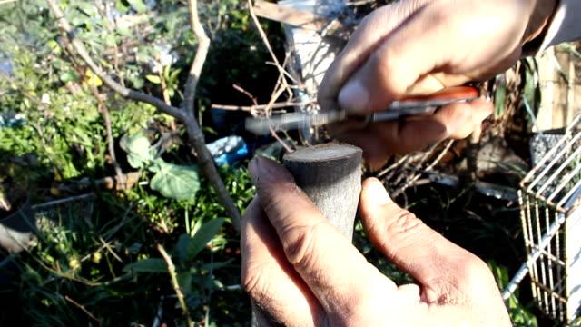 vídeos de stock e filmes b-roll de árvore da prótese - swiss army knife