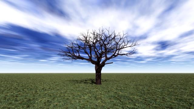 tree grow video