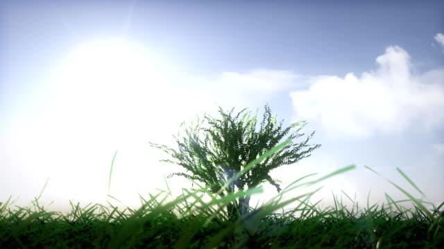vídeos de stock, filmes e b-roll de árvore crescendo com o fundo do céu ensolarado - um único objeto