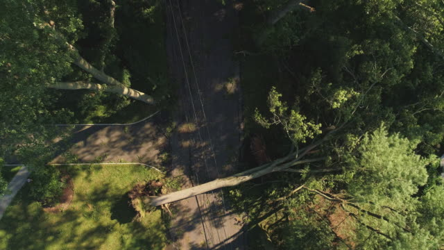 a tree has fallen because of the strong wind and it barricaded the street and destroyed power lines and internet and tv cables in a small town in new jersey after a storm.  aerial video with the descending camera motion. - albero caduto video stock e b–roll
