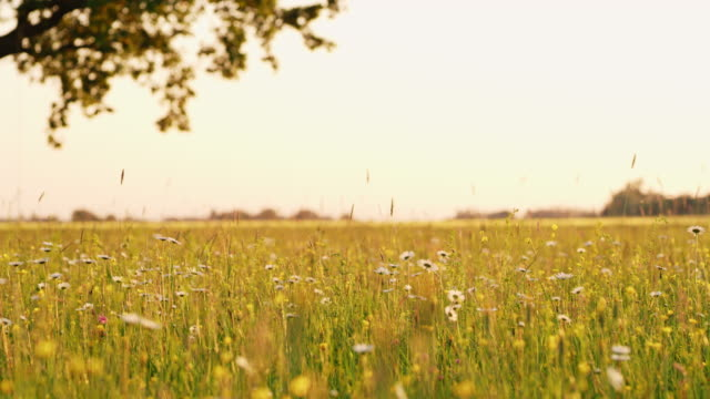 DS Tree in a spring meadow video