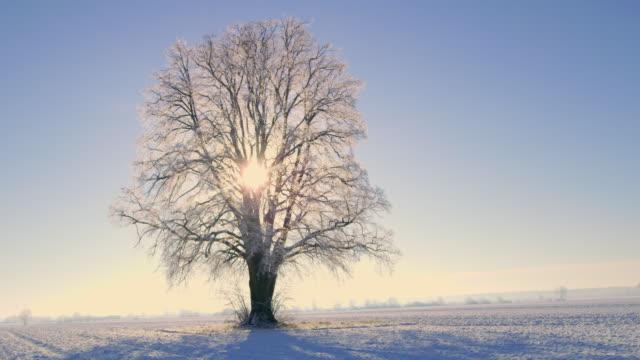 ds 樹在所有四個季節 - four seasons 個影片檔及 b 捲影像