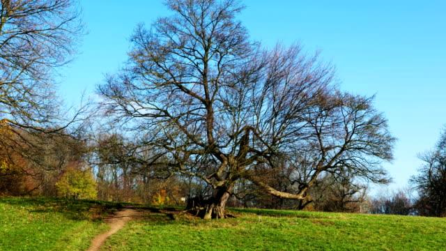 Tree in autumn - Hyperlapse video