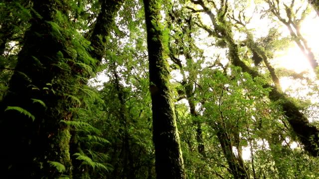 HD: Tree in deep tropical rainforest video