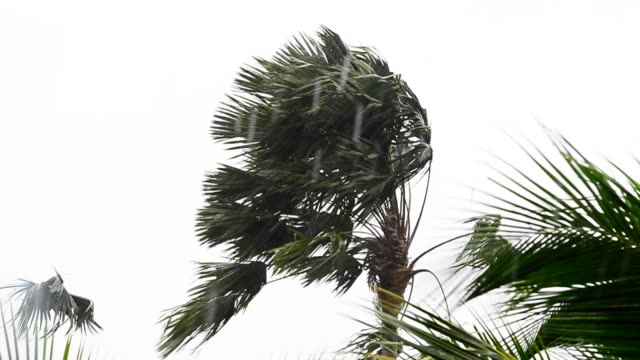 tree in storm. - monsone video stock e b–roll