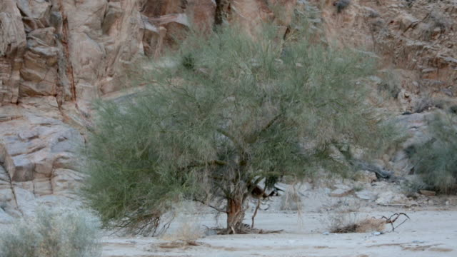 tree in the desert video
