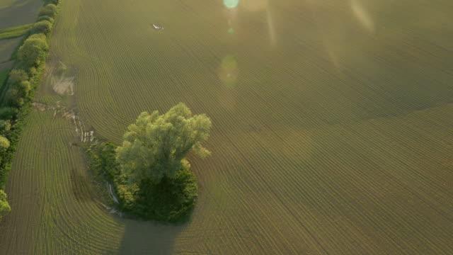 vídeos de stock e filmes b-roll de árvore aérea no meio de um campo de milho - multicóptero