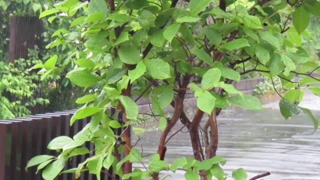 vídeos de stock e filmes b-roll de tree in the rain - maio