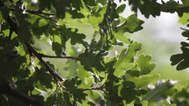 tree in the rain - дубовый лес стоковые видео и кадры b-roll