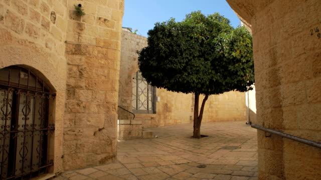 Tree in Tiny Jerusalem Plaza video