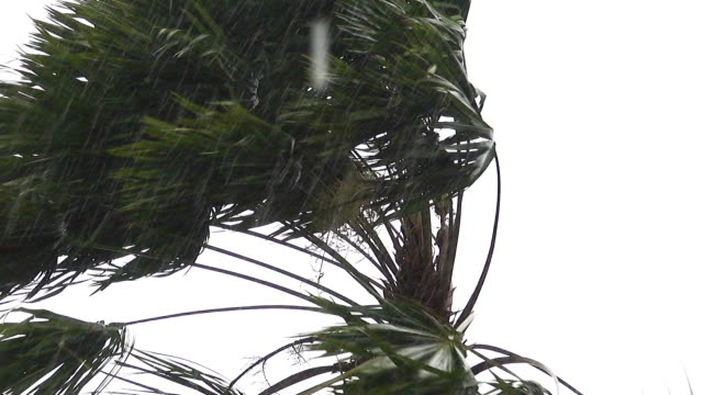 tree in tropical storm. - monsone video stock e b–roll
