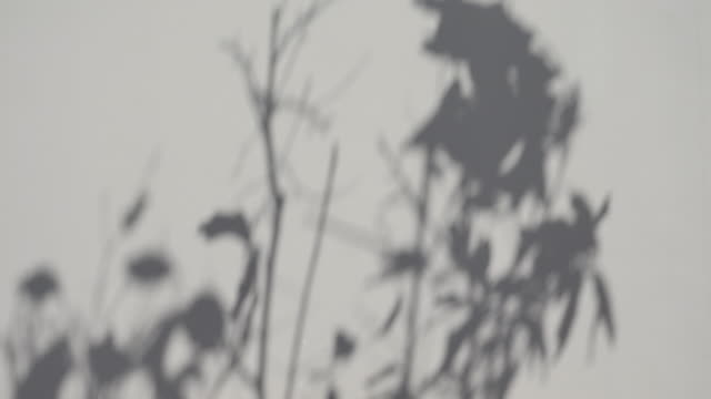 Tree leaf shadow in blurry motion on the wall video