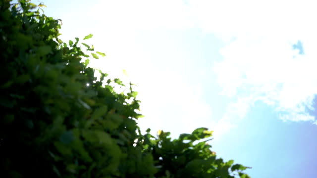 Tree leafs and sun Tree leafs and sunlight flare plant part stock videos & royalty-free footage