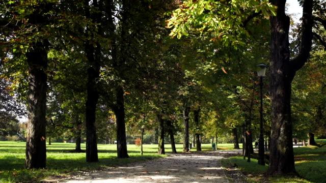 vídeos de stock e filmes b-roll de árvore deixa cair para baixo em um belo parque - parque público