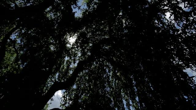 tree leaves free fall video