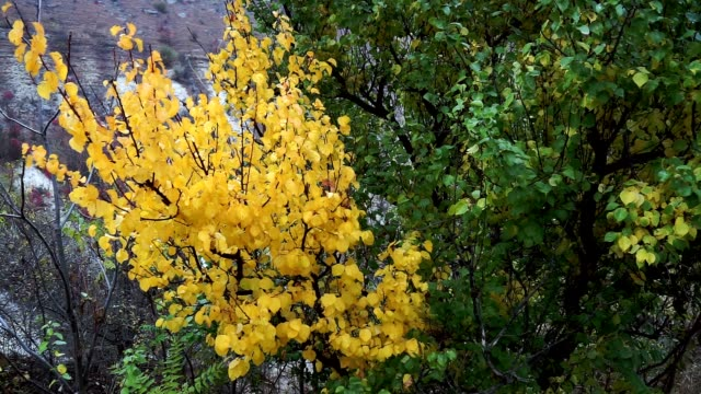 樹葉。秋天的綠黃葉。秋天自然樹葉背景。自然概念。 - 枝 植物部分 個影片檔及 b 捲影像