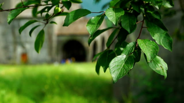 Tree leaves in front of ancient armenian church video