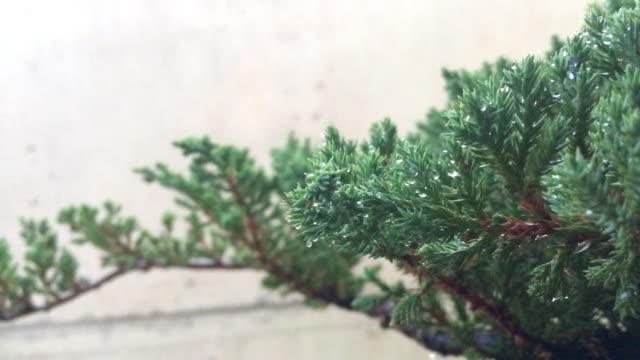 夏風に4k木の葉。 - 中林大樹点の映像素材/bロール