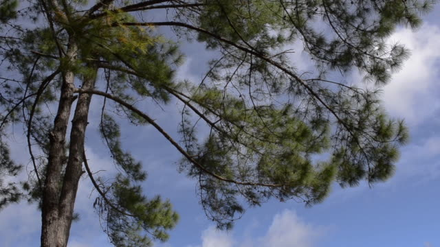 夏風の木の葉。 - 中林大樹点の映像素材/bロール