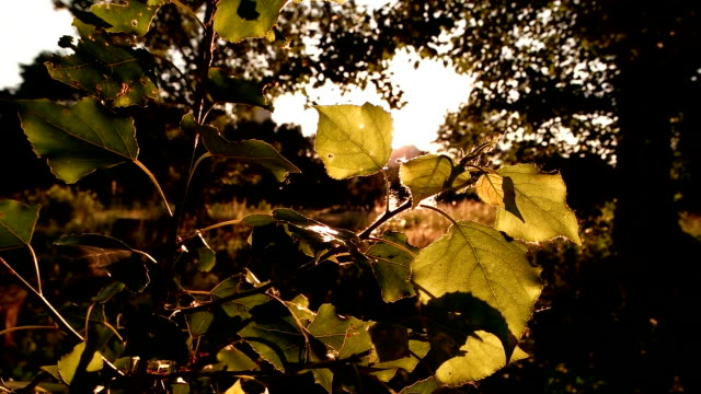 Tree leaves in sunlight.