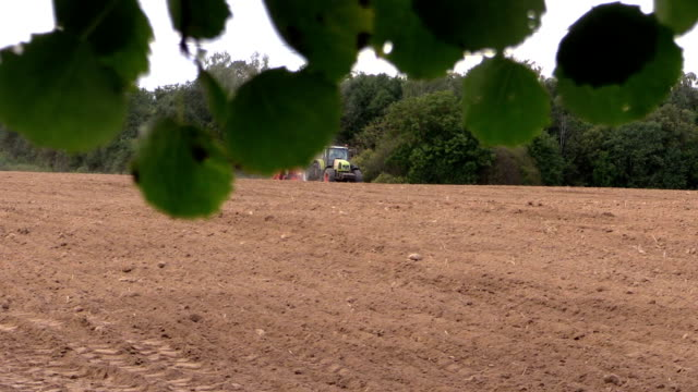 Tree leaves move in wind and tractor fertilize sow field video