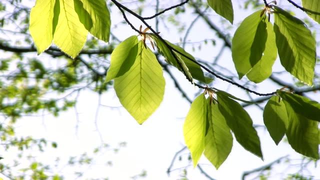 Tree leaves - Stock Video video