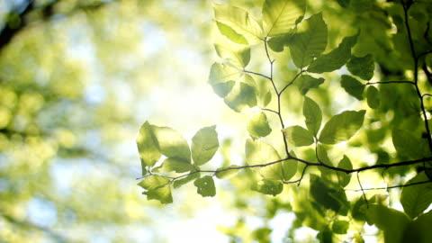 vídeos de stock e filmes b-roll de folhas de árvore - folha