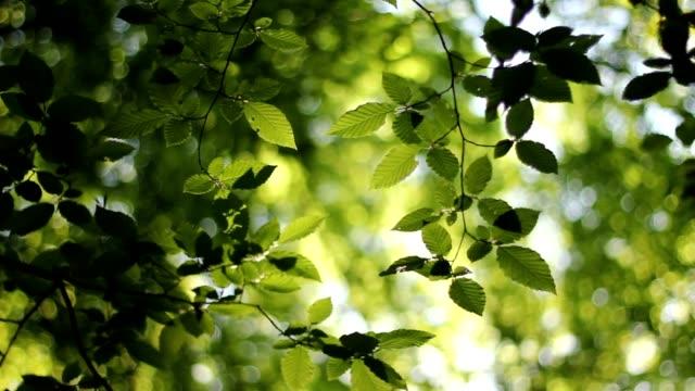 Tree leaves video