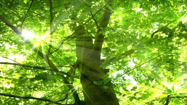 Tree Light Glimmer
