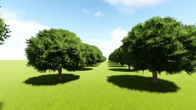 tree lined entrance to tree alley southern plantation - viale video stock e b–roll
