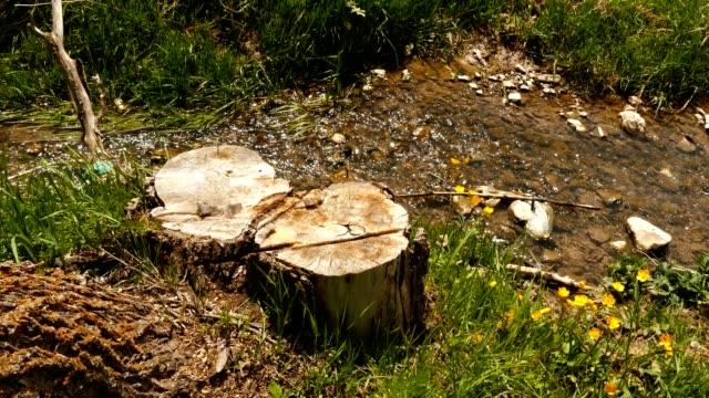 träd stockar med gräs och blommor - anatolien bildbanksvideor och videomaterial från bakom kulisserna