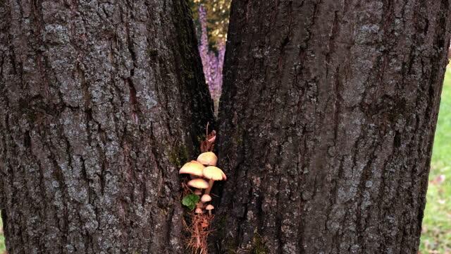 Tree mushrooms growing in a tree.