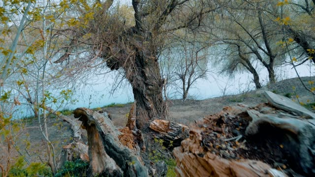 tree near the river - albero caduto video stock e b–roll