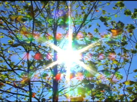 tree of light - 枝 植物部分 個影片檔及 b 捲影像