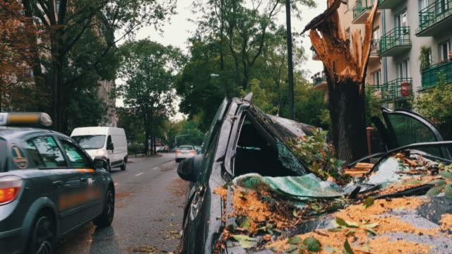 träd på en skada bil - försäkring bildbanksvideor och videomaterial från bakom kulisserna