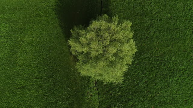 Tree on a Meadow From Directly Above