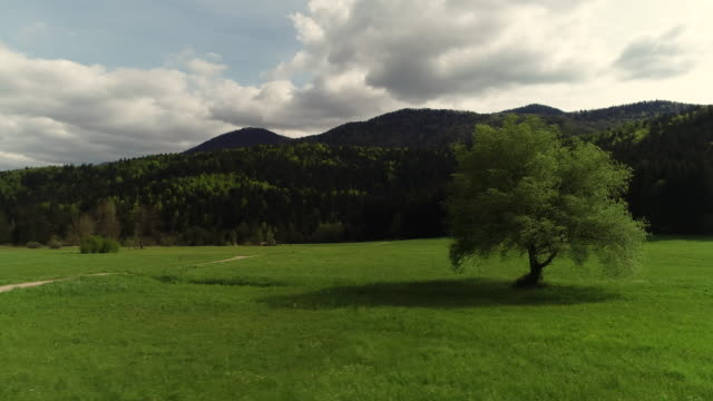 Tree on a Meadow From Drone Point of View