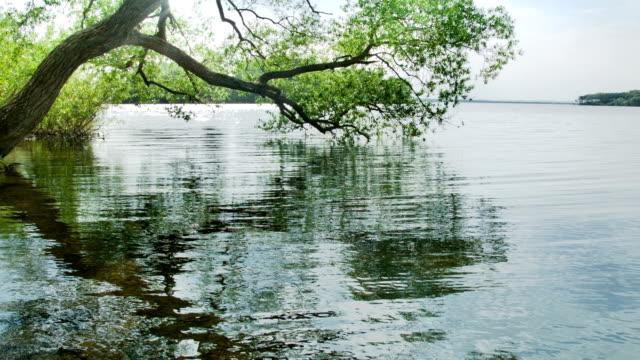 Tree on lake video