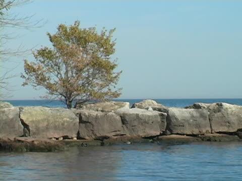木の岩でできた半島 - 水鳥点の映像素材/bロール